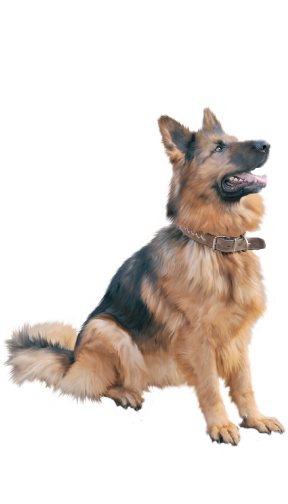 german-dog-home